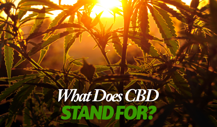 What does CBD Stand For and How Can it Benefit Me?