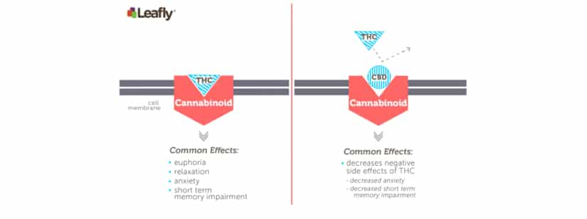 Can Cannabidiol Get you High