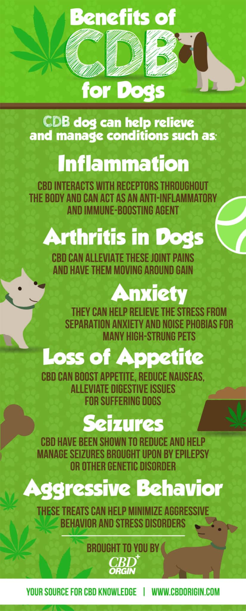 The Benefits of CBD Oil for Dogs Ingographic
