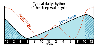 Sleep wake cycle and cbd