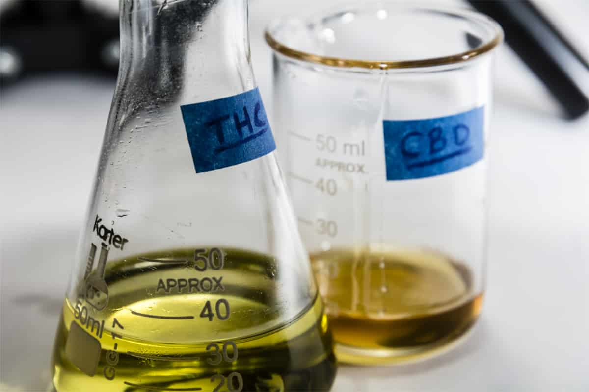 Does CBD Show Up on Drug Tests? Know! the Facts!