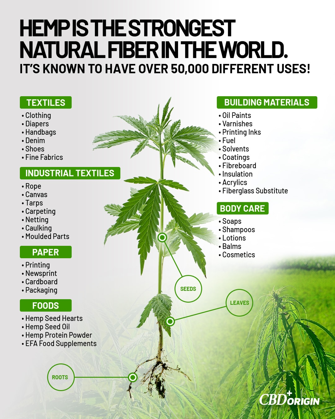 What is Hemp | The many different usages of the Hemp plant