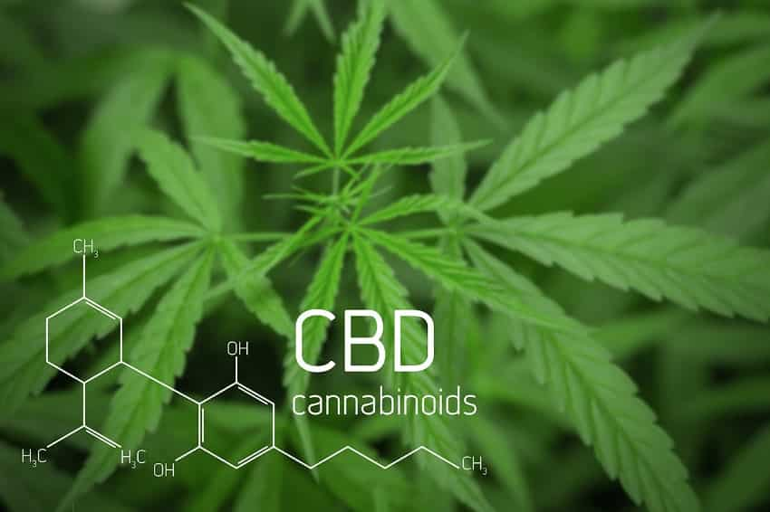 Research on CBD Benefits by Condition - CBD Origin