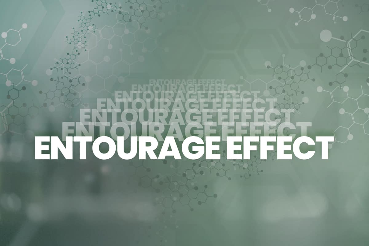The Entourage Effect: Unlocking the Full Power of Cannabis | CBD Origin