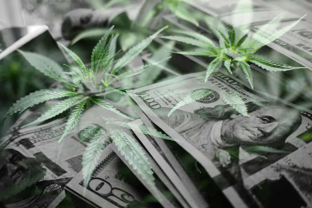 FDA Hearing Leads to Decline in Cannabis Stocks