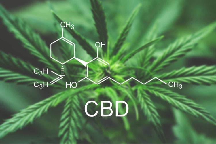 CBD Stands for Cannabidiol | CBD Origin