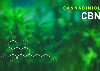 What is Cannabinol: A Beginner's Guide to CBN | CBD Origin